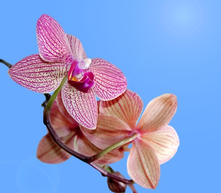 """Orchid"